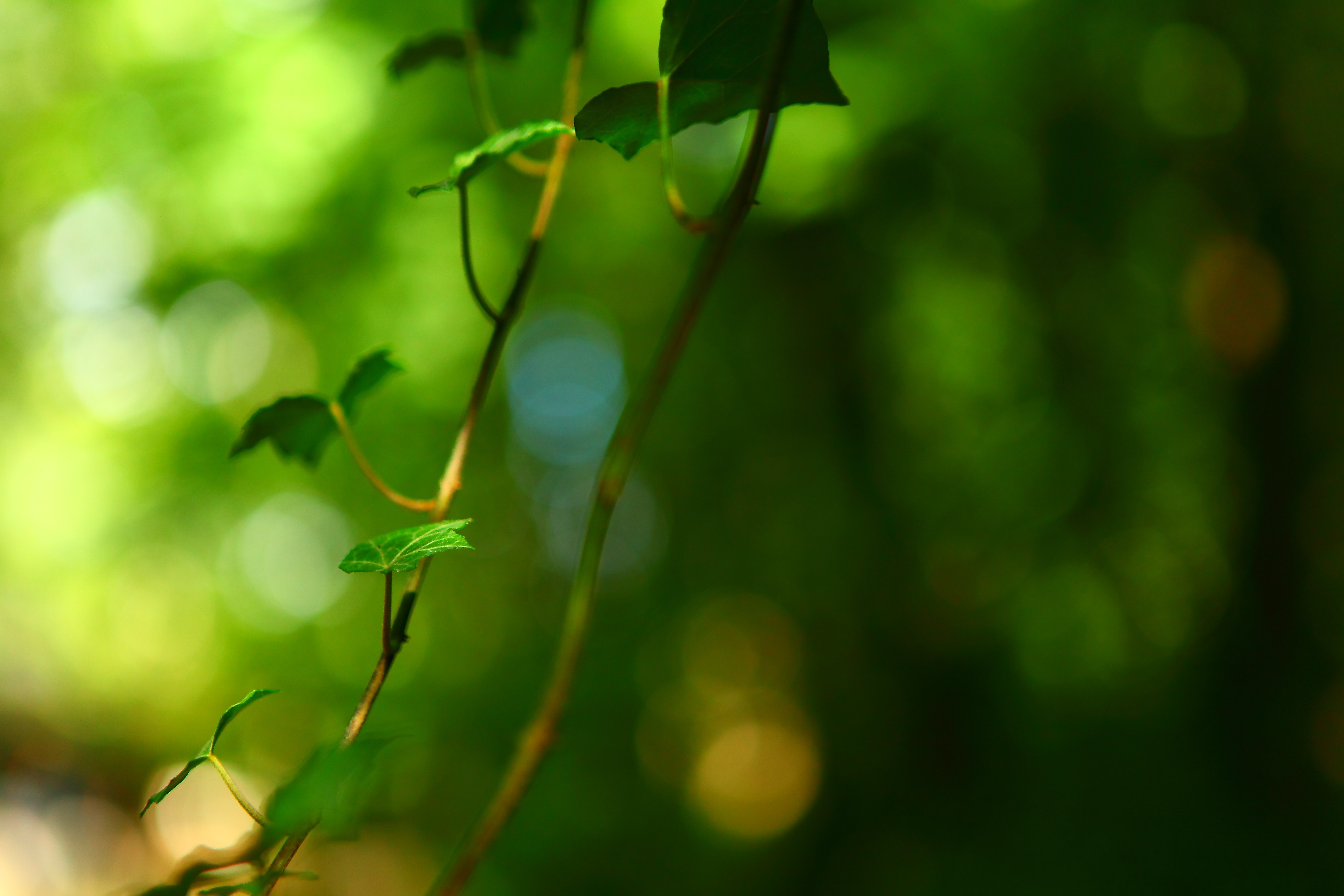 nature plants forest macro