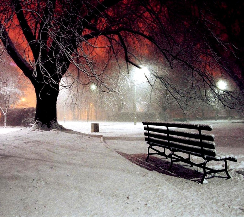 park winter nature