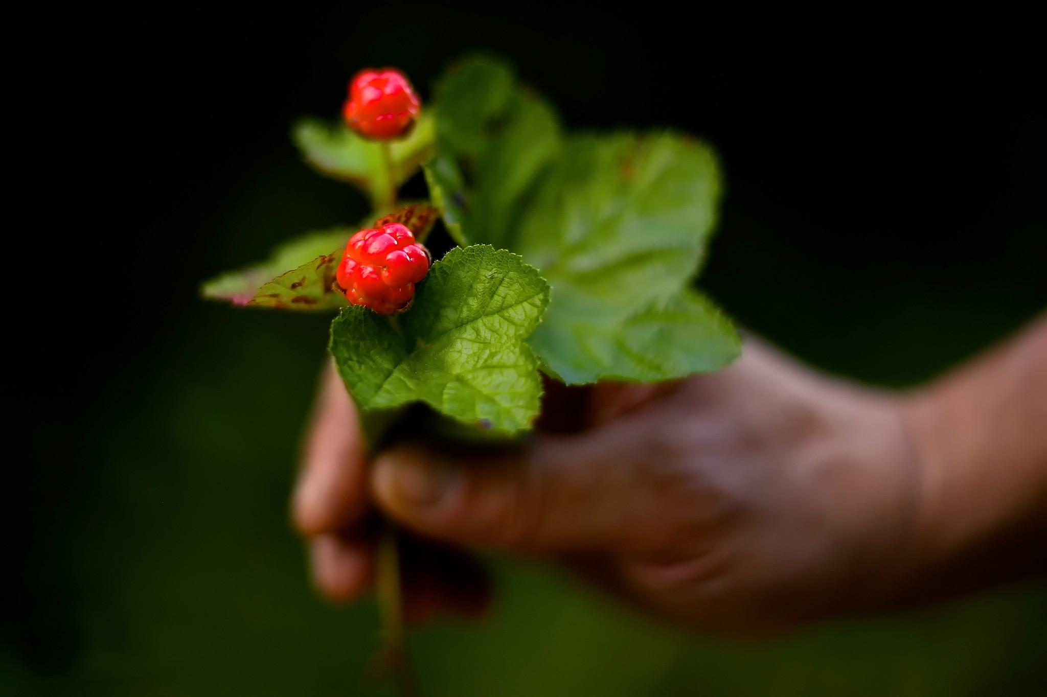 plants berries hands fruit