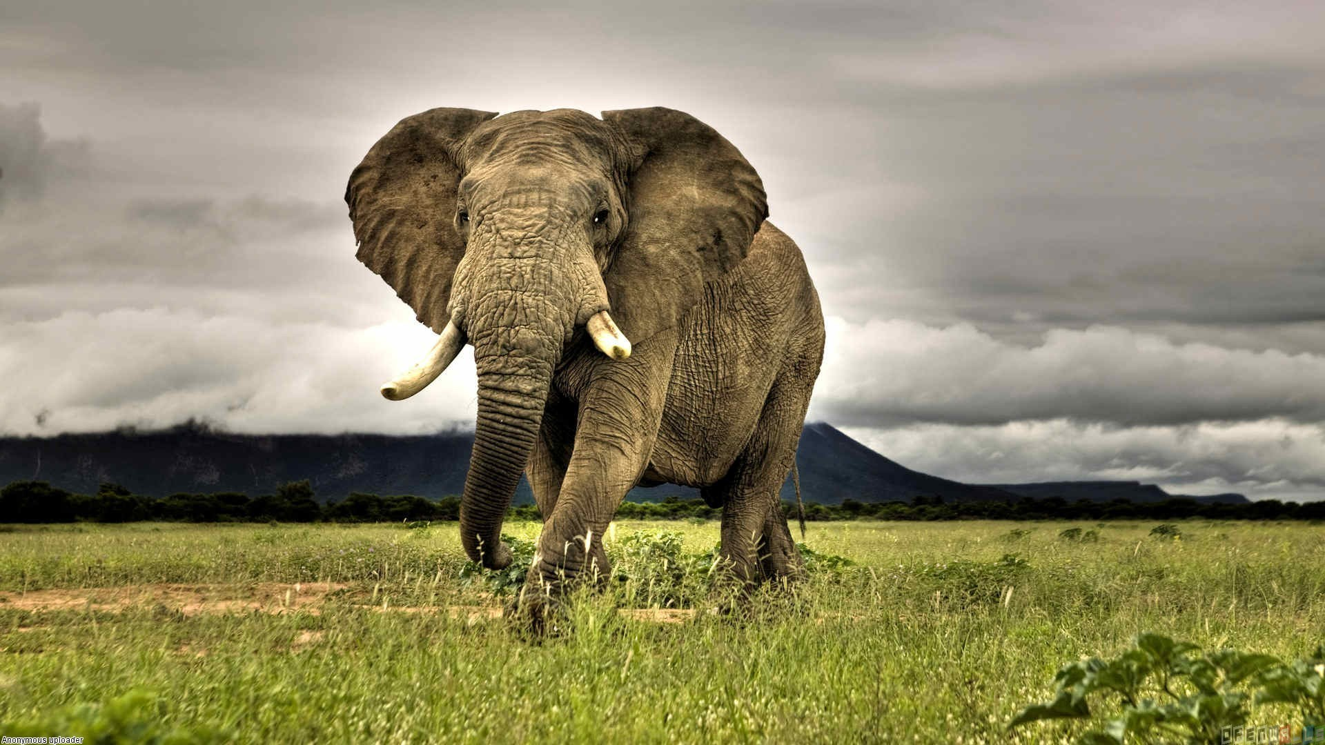 savannah wildlife overcast animals elephant nature photography african grass