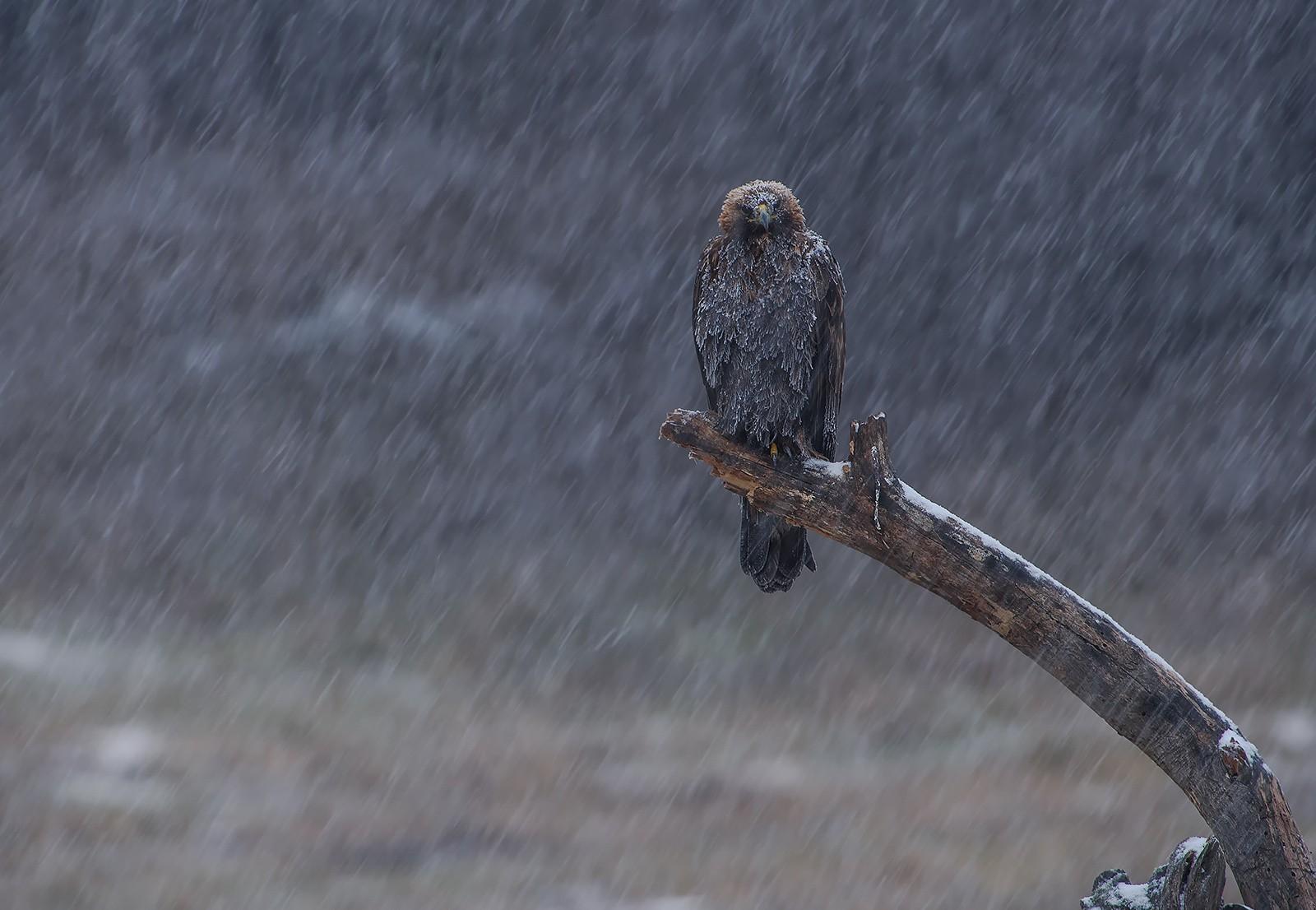 snow birds nature eagle