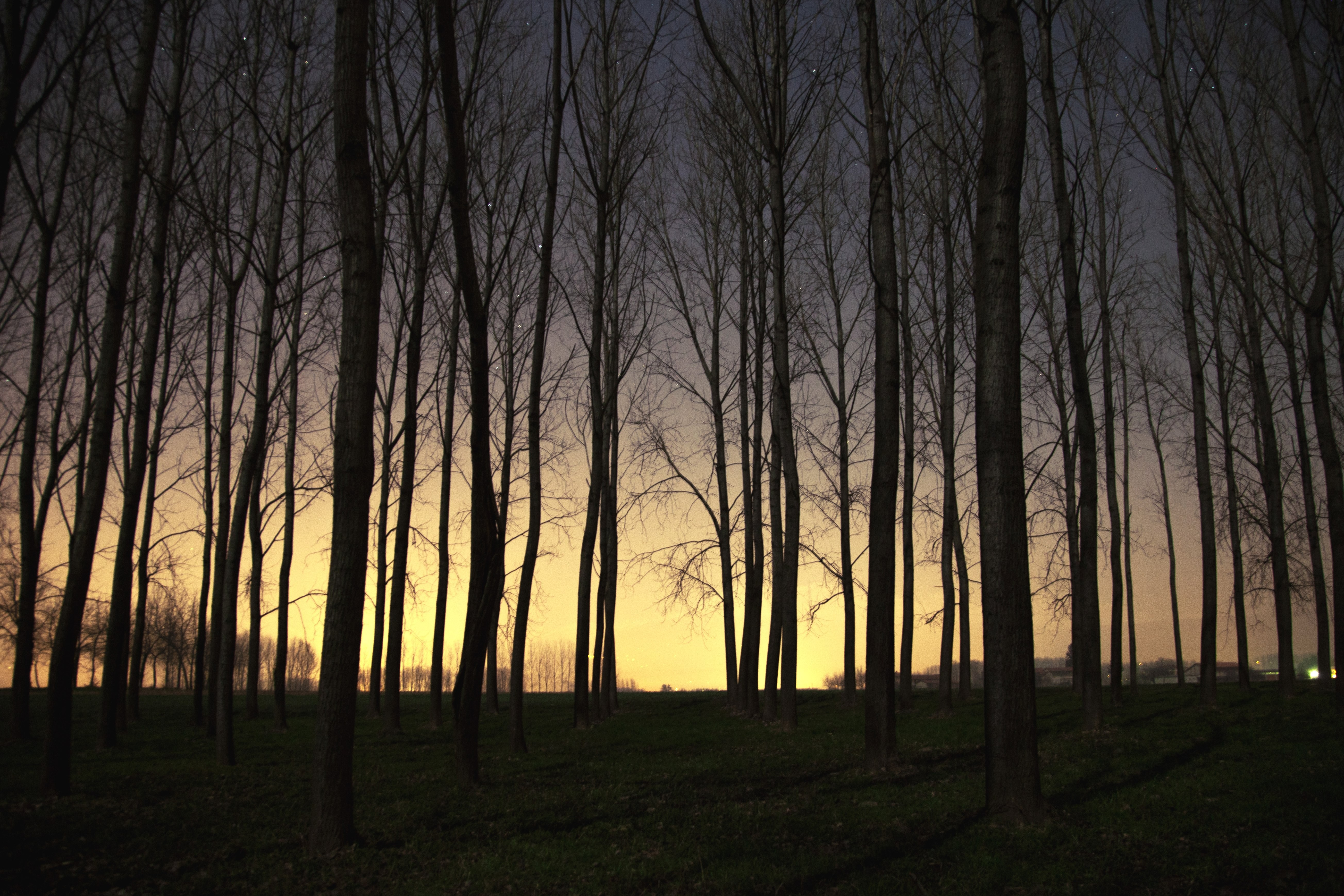 sunset landscape trees dead trees forest