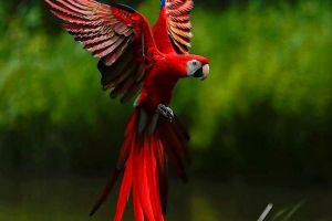 abstract parrot flowers nature