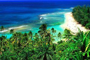 aerial view sea landscape beach palm trees tropical