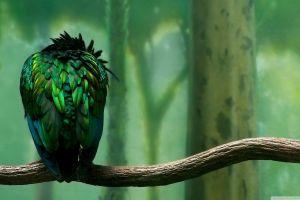 animals birds artwork tropical