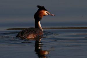 animals birds water