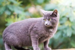 animals cats closeup