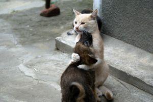 animals cats dog