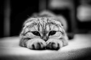 animals cats monochrome
