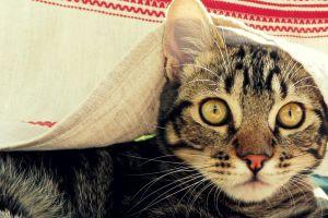 animals cats yellow eyes