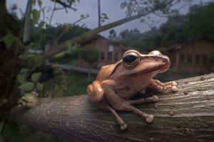 animals closeup amphibian nature trees depth of field frog