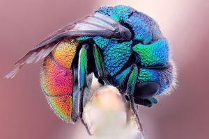 animals colorful insect