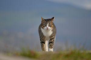 animals depth of field cats