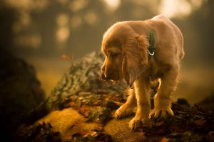 animals depth of field dog