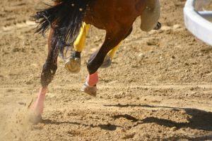 animals dirt horse