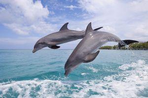 animals dolphin wildlife nature