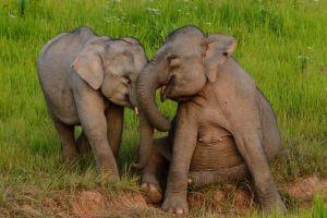 animals elephant baby animals happy