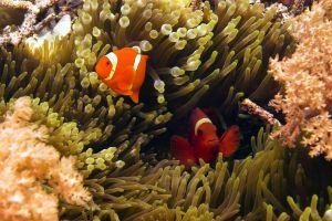 animals fish underwater plants