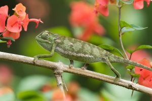 animals gecko plants
