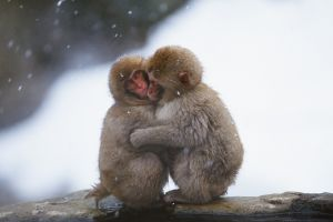 animals monkey nature