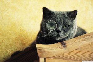 animals monocles cats