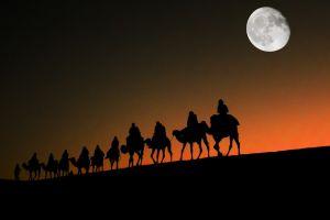 animals moon night sky nature desert