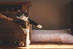 animals natural light cats