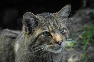 animals nature cats