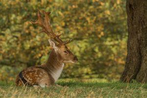 animals nature deer