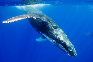 animals nature whale underwater wildlife