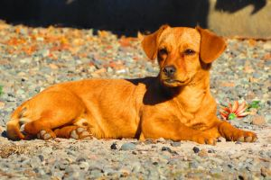 animals pebbles dog
