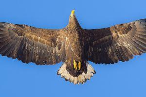 animals photography eagle