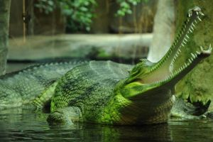 animals reptiles crocodiles nature