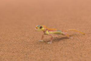 animals reptiles lizards