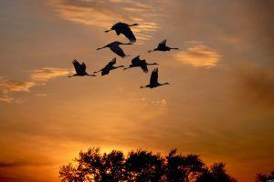 animals shadow birds outdoors