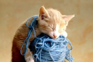 animals smiling cats wool