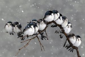 animals snow birds