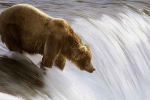 animals water nature bears