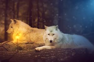 animals wolf lantern digital art