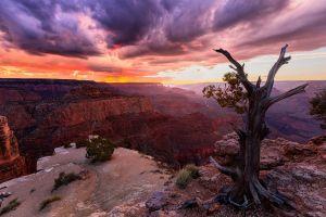 arizona grand canyon sunset clouds dead trees nature canyon trees landscape usa