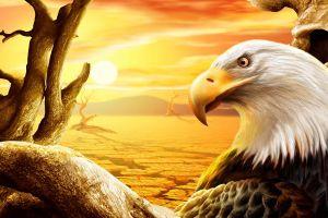 artwork birds eagle animals