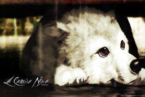 artwork dog animals
