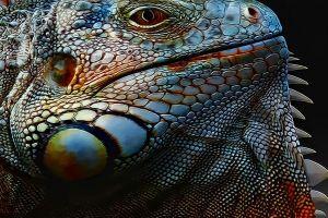 artwork gecko animals