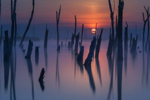 atmosphere mist lake sky sunlight landscape dead trees nature sunset reflection