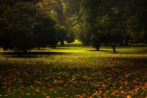 australia leaves trees landscape calm nature fall park green grass