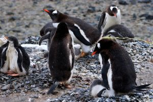 baby animals birds animals penguins