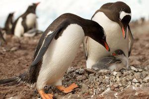 baby animals birds penguins animals