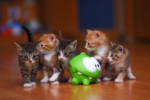 baby animals photography kittens