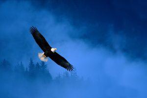 bald eagle nature icon animals birds