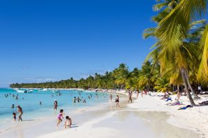 beach palm trees nature